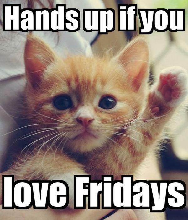 Cute Cat Memes Funny Kitty Pics